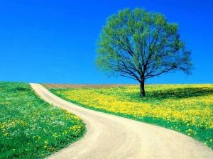 flower-road-1024.jpg